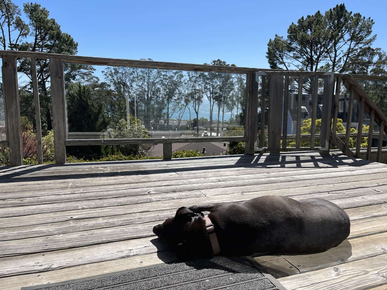 Cleo asleep on the deck with the Pacific ocean in the distance